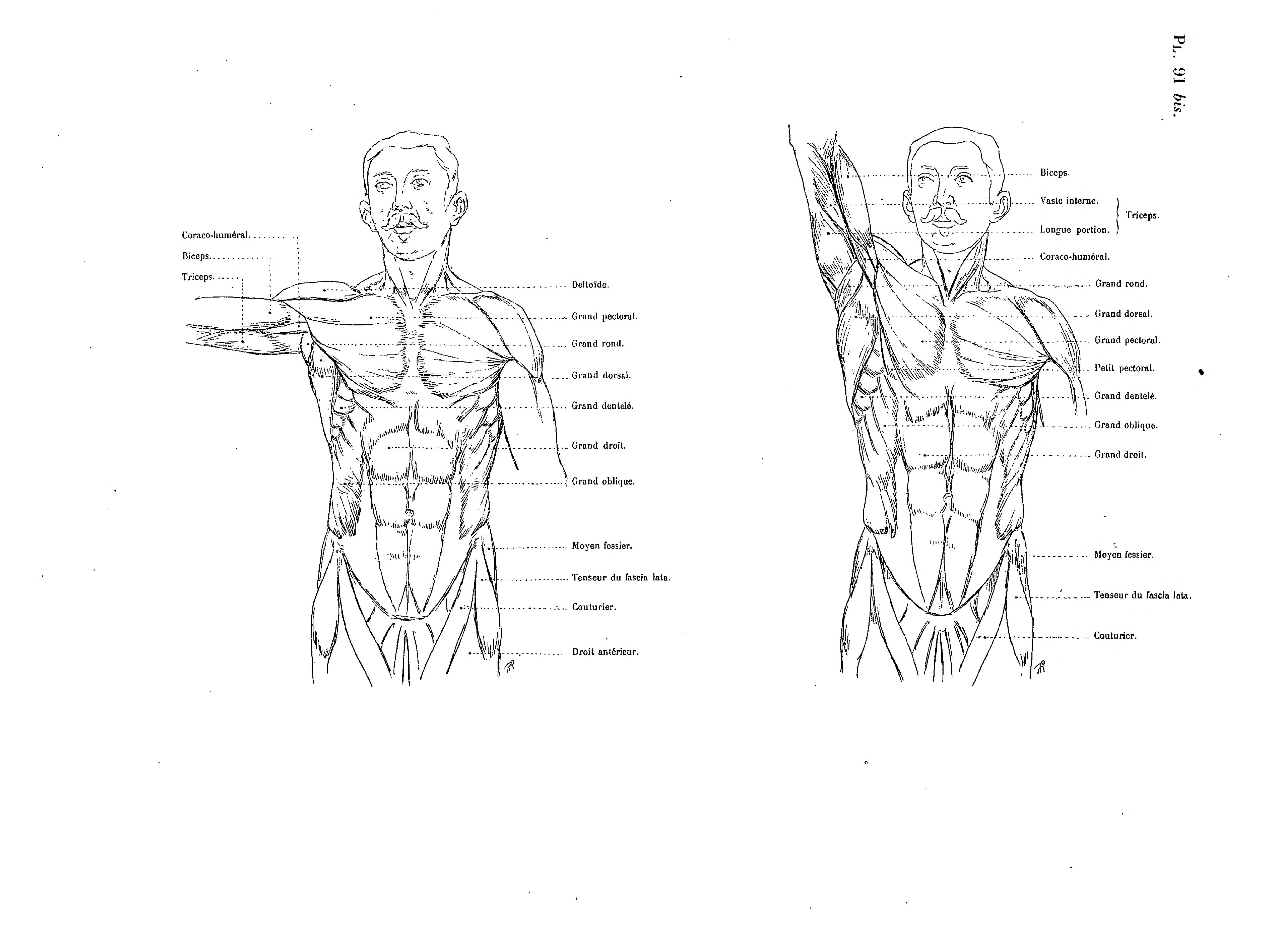 File:Richer - Anatomie artistique, 2 p. 113.png - Wikimedia Commons