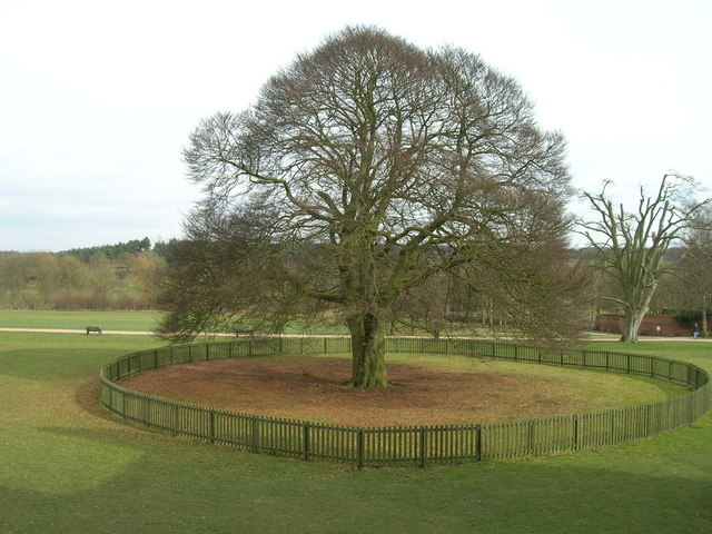 Rufford Abbey Parkland - geograph.org.uk - 1767871