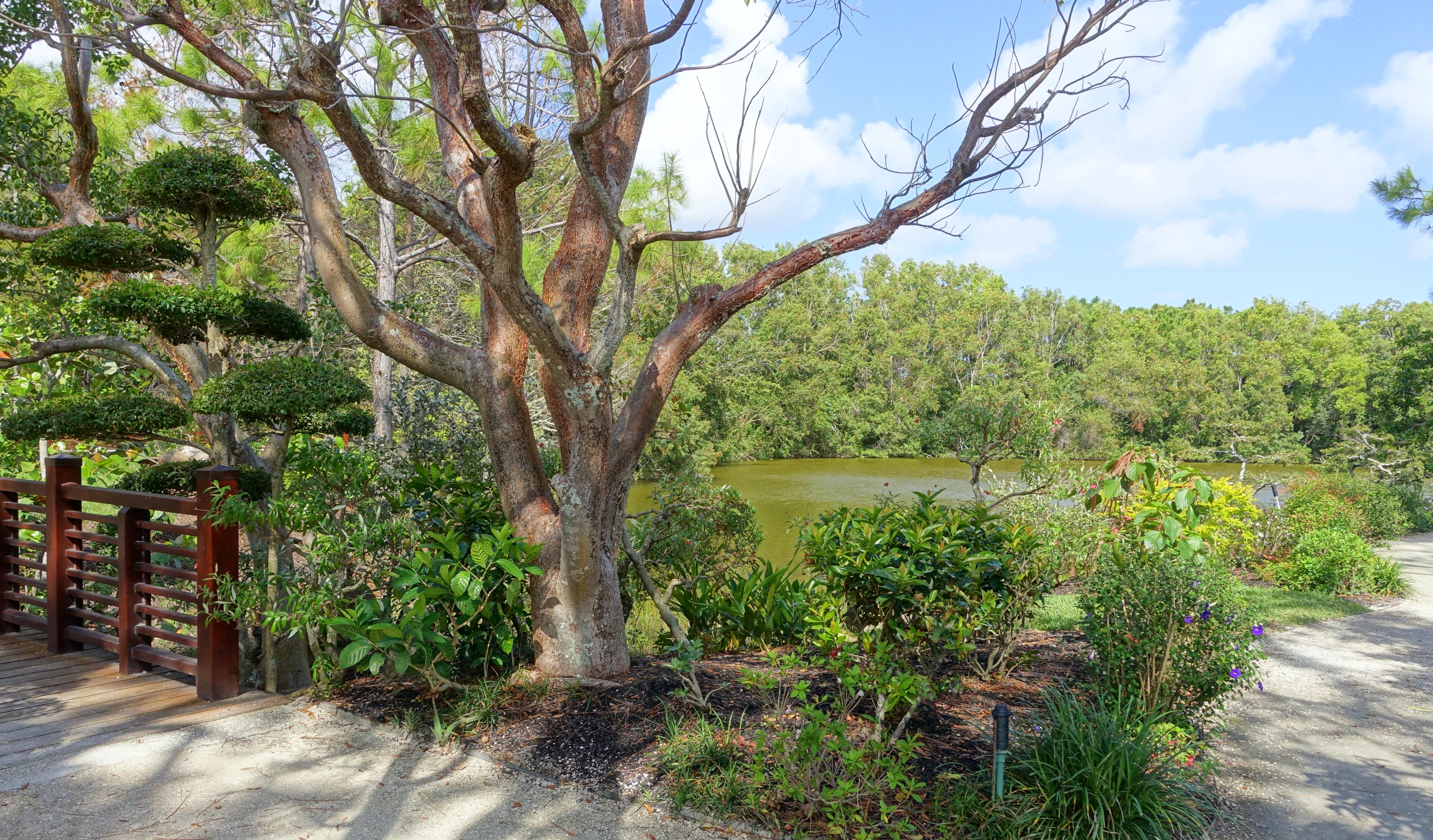 File:Shinden Garden   Morikami Museum And Japanese Gardens   Palm Beach  County, Florida