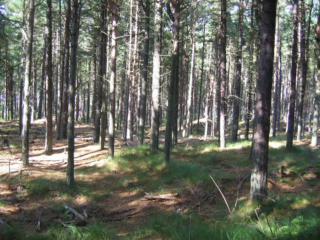 Tentsmuir Forest. - geograph.org.uk - 58166