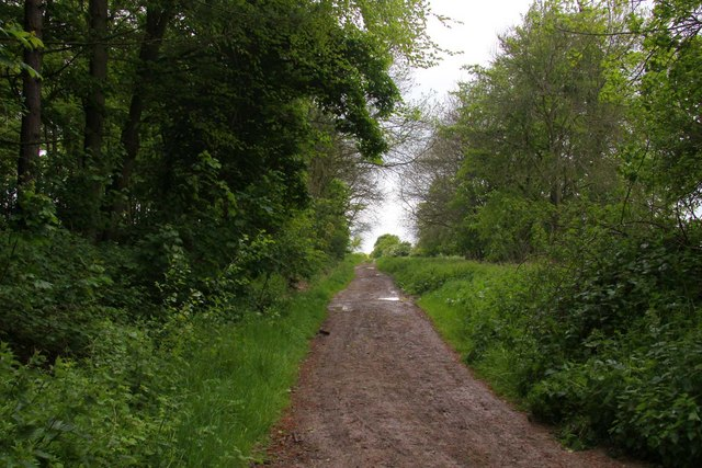 The Ridgeway at Cuckhamsley Hill - geograph.org.uk - 1308845