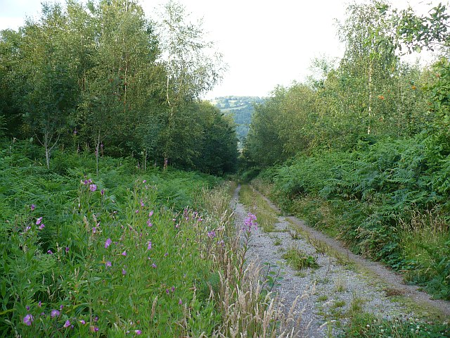 Track through Coed Craig Ruperra - geograph.org.uk - 896617