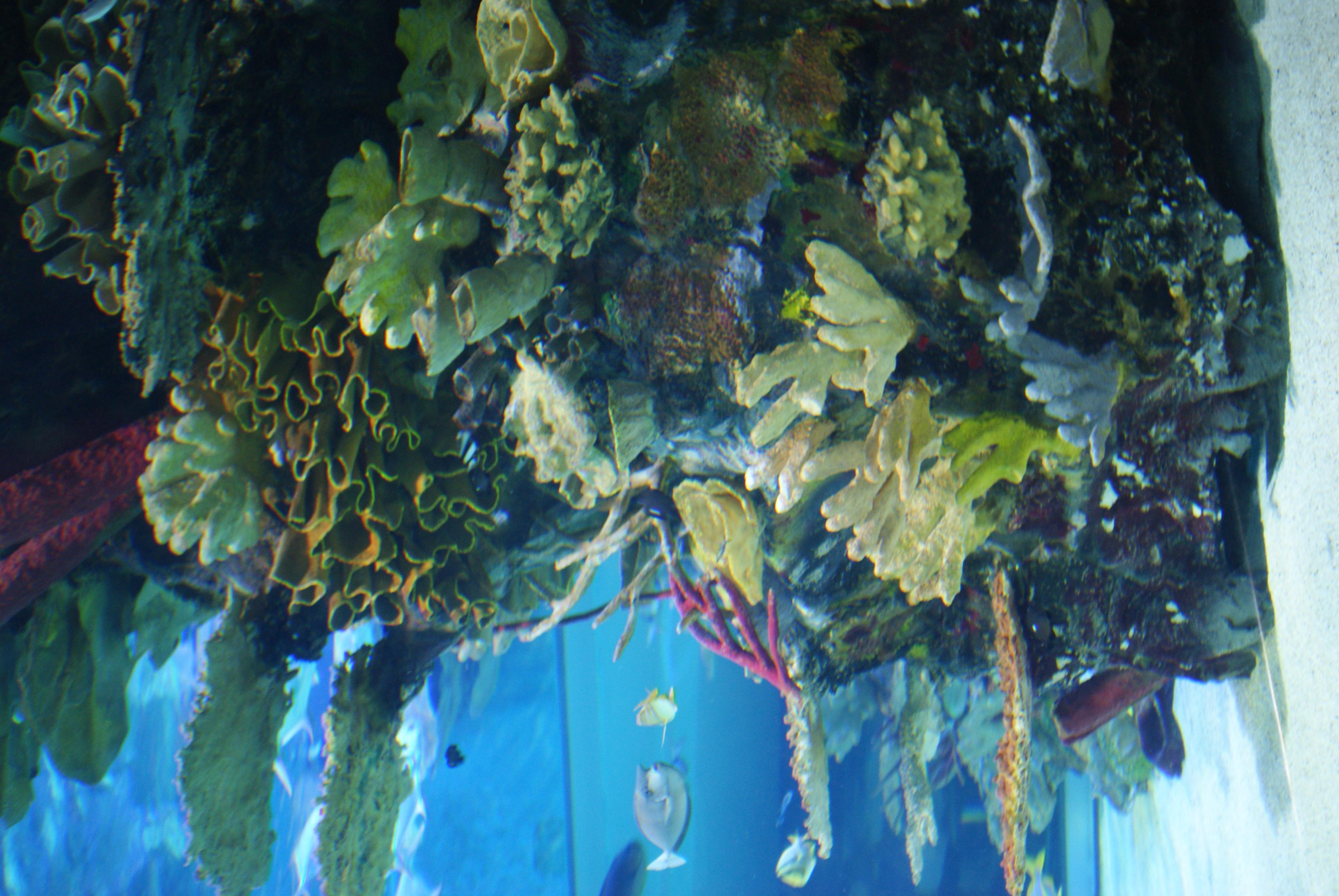 Description Tropicarium-Oceanarium Budapest 23.JPG