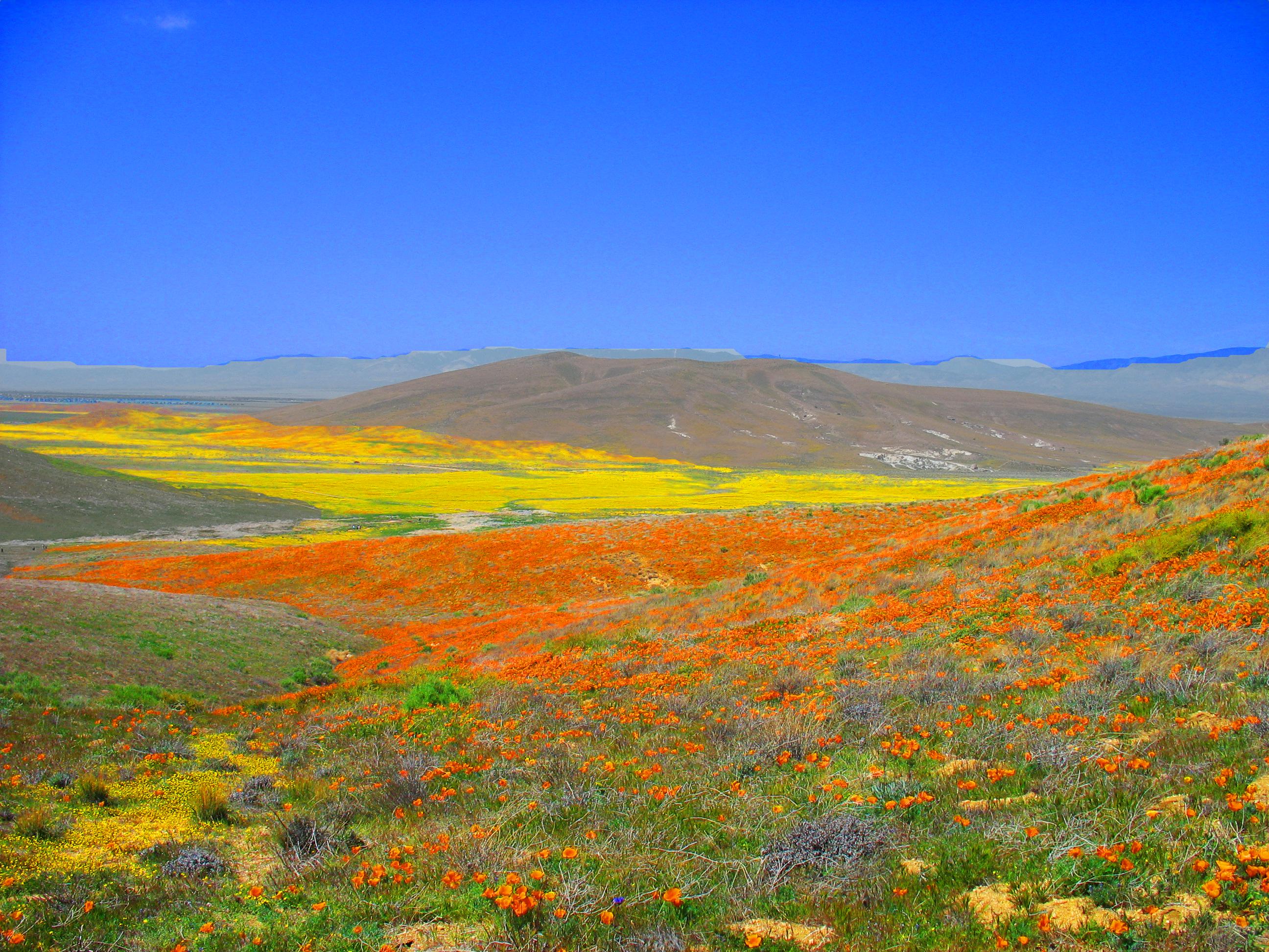 antelope valley에 대한 이미지 검색결과
