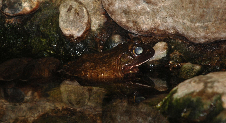 File:Baltimore Aquarium - Frog 1.jpg - Wikimedia Commons