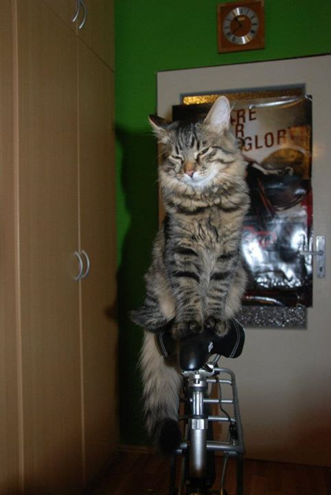 Cat sitting on bike.jpg