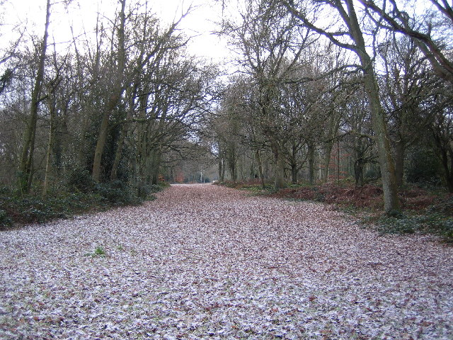 Chorleywood Common - geograph.org.uk - 95872