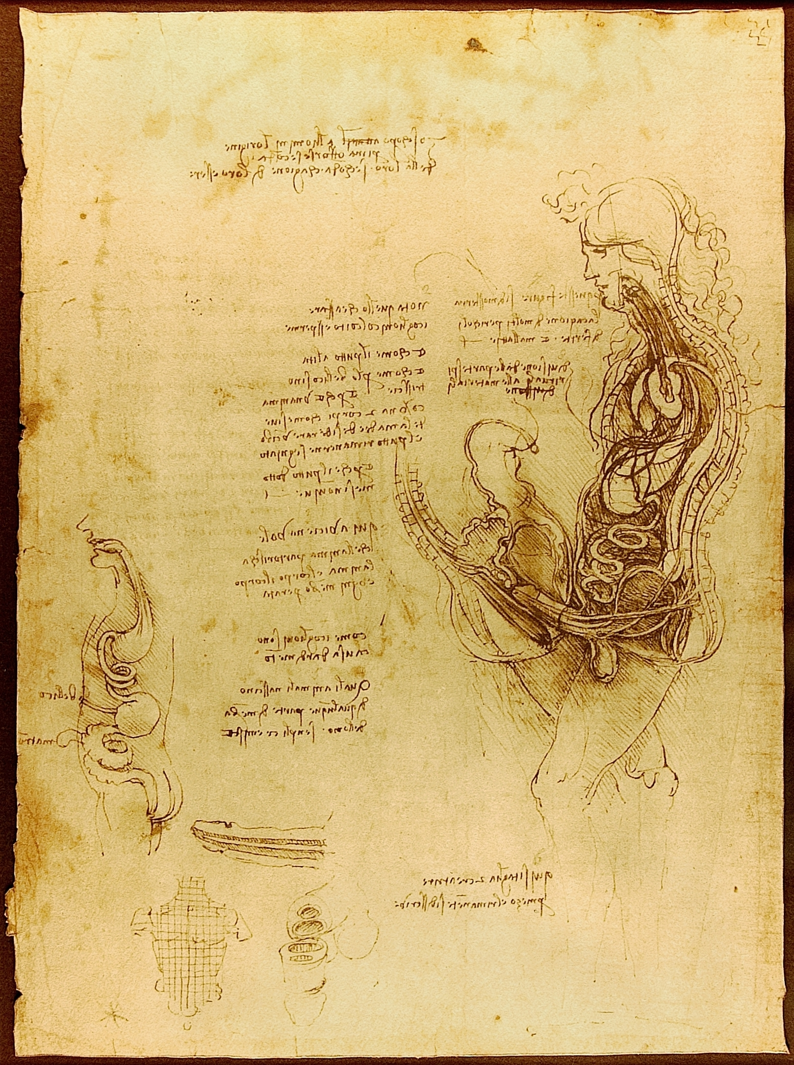 File:Da Vinci Coition of a Hemisected Man and Woman Luc Viatour.jpg ...