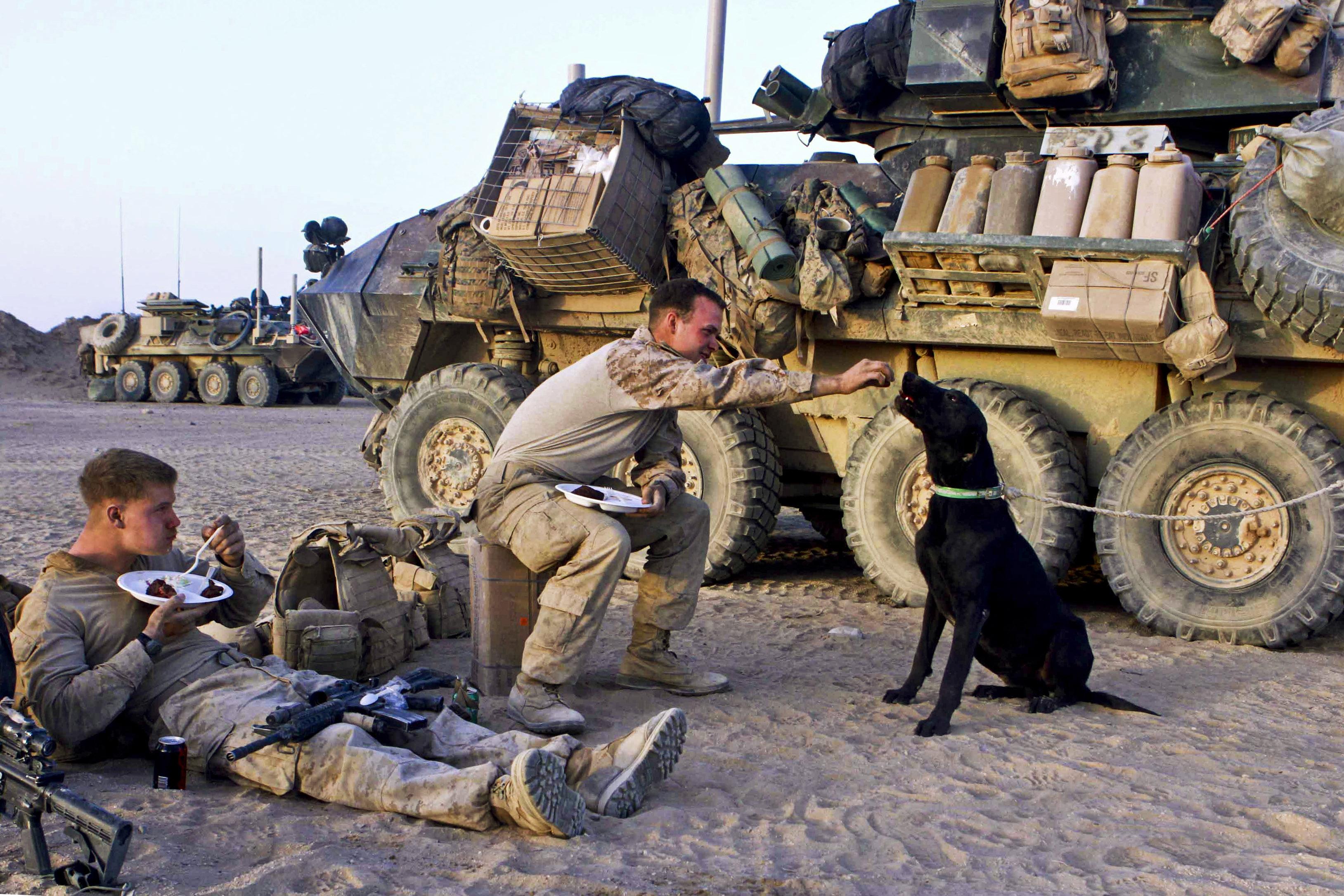 Image Result For Dog Training Camp
