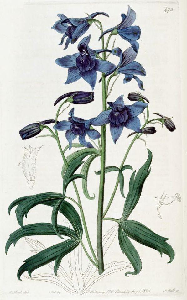 Blue Floral Vintage Shoes