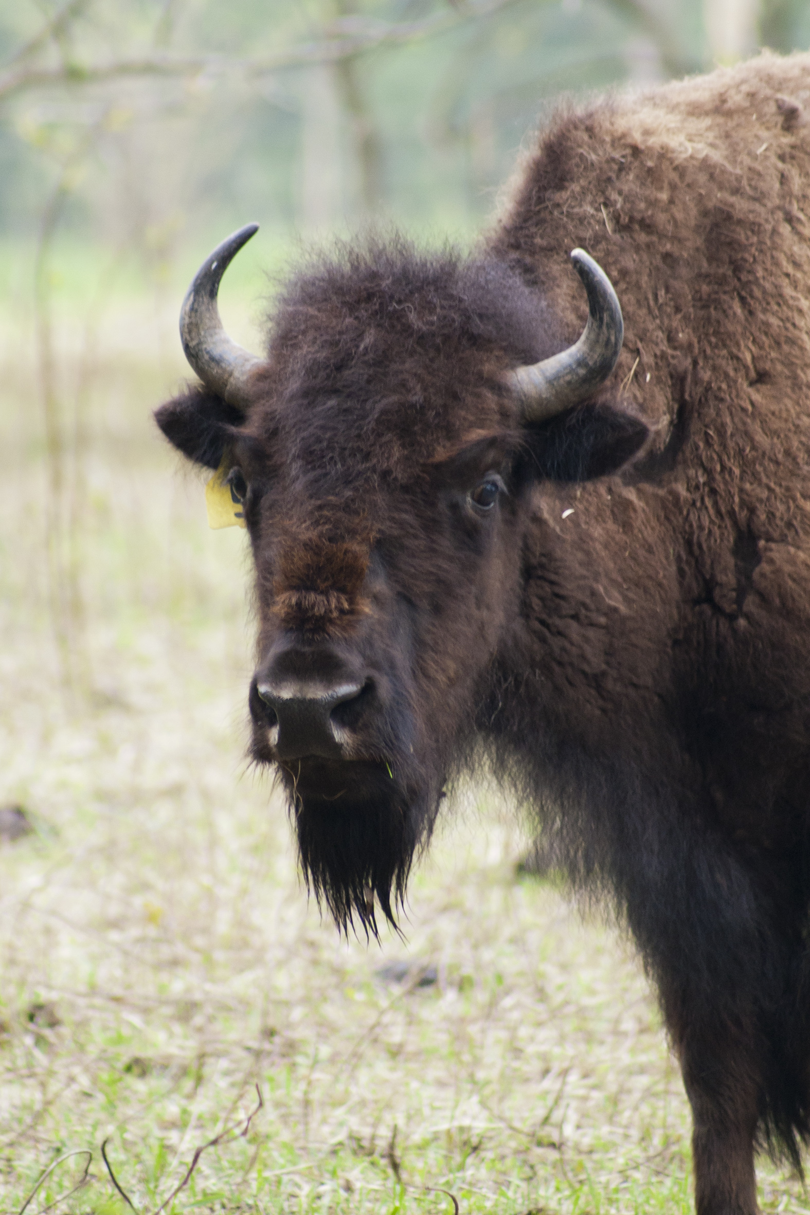 singles in bison Coverage includes buffalo bisons tickets, scores, stats, news and more.
