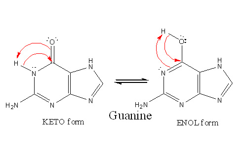 structural biochemistrynucleic acidnitrogenous bases
