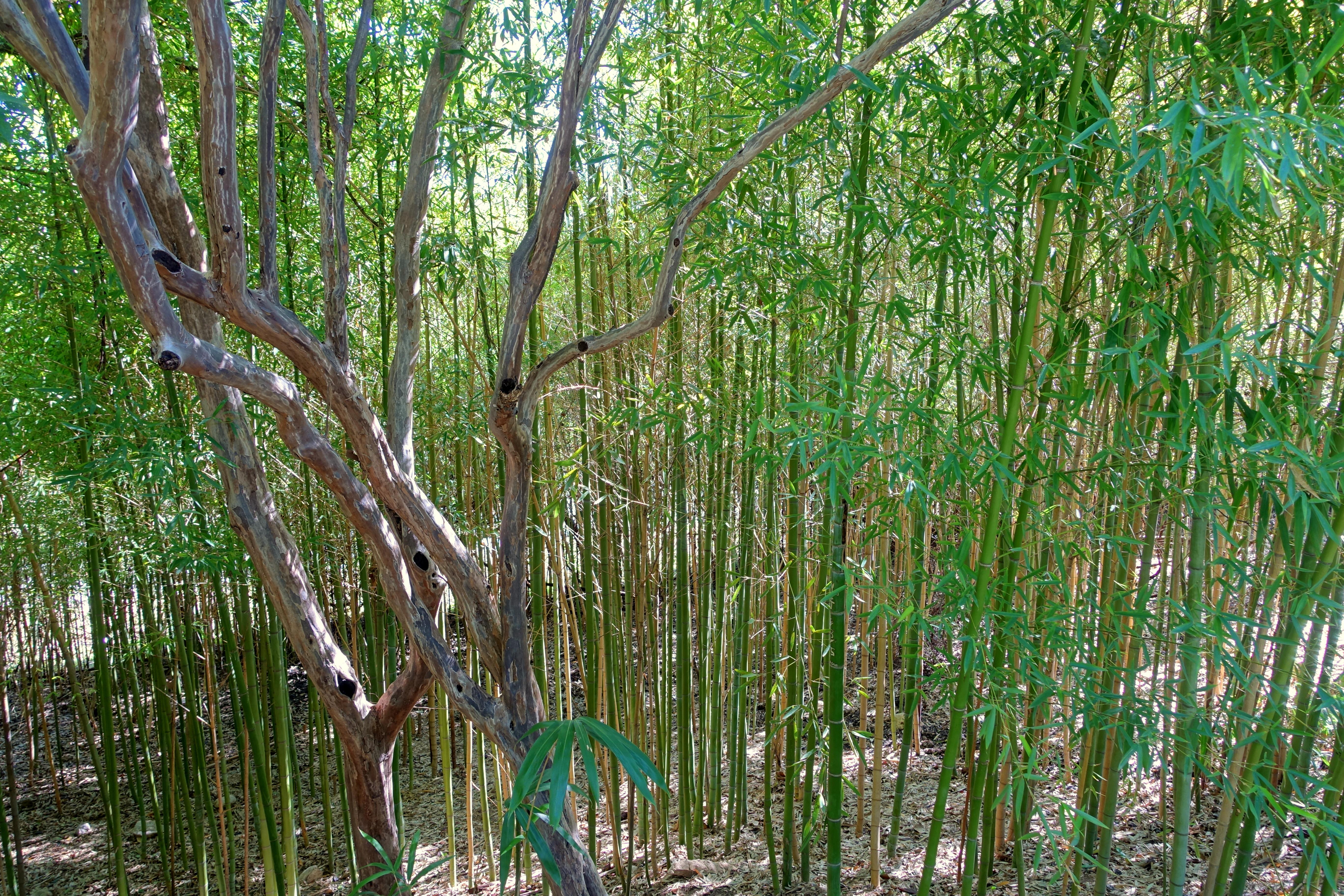 File:Isamu Taniguchi Japanese Garden   Zilker Botanical Garden   Austin,  Texas   DSC09077