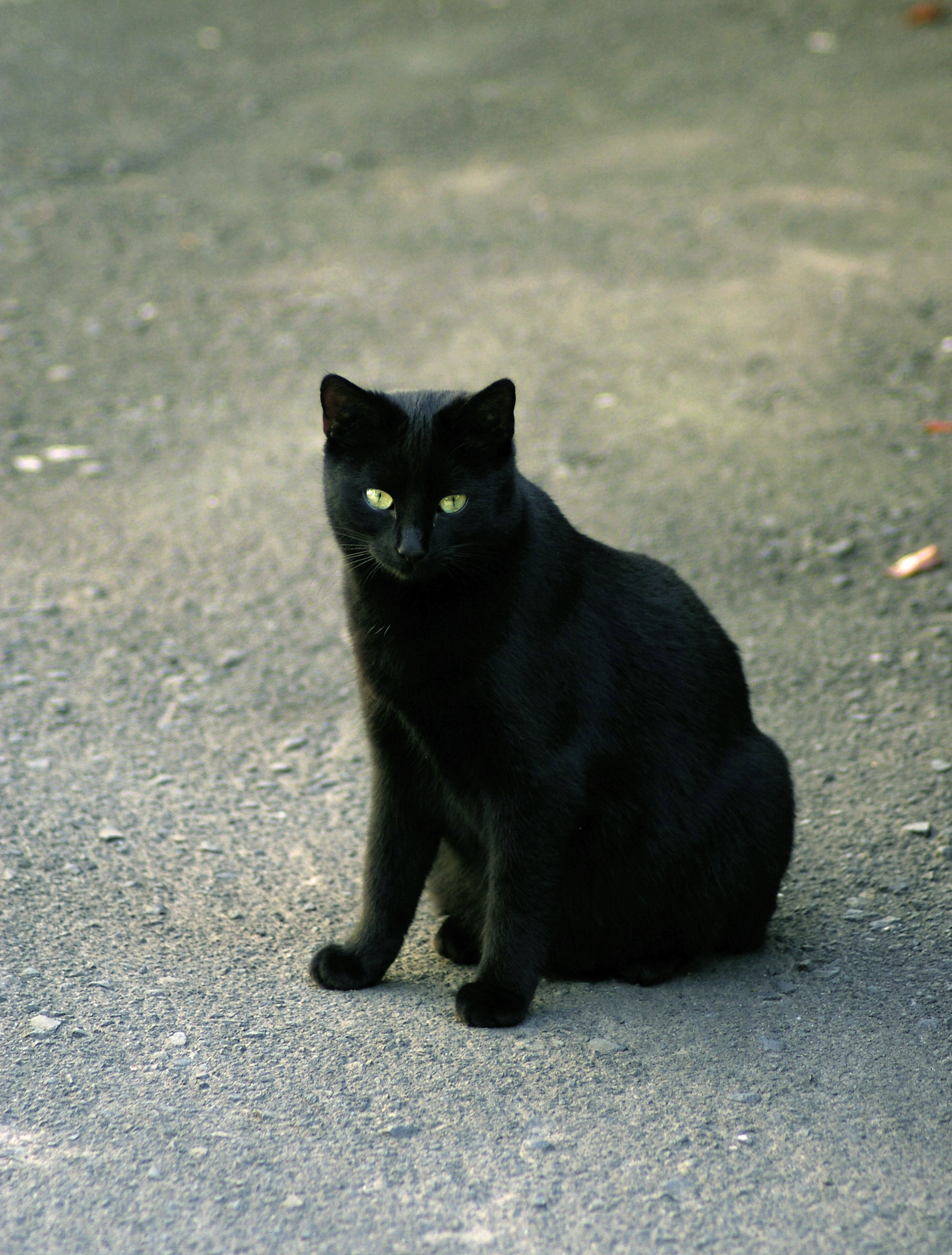 Warrior Cats Black Cat