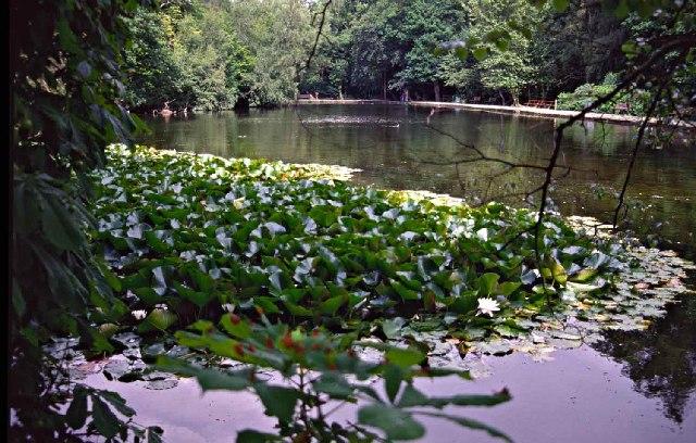 Lake in Whitewebbs Park - geograph.org.uk - 47682