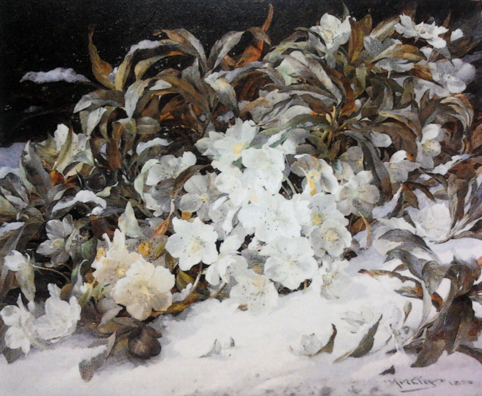 File Muckley Winter flowers Wikimedia mons