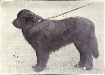 Newfoundland (Black) from 1915