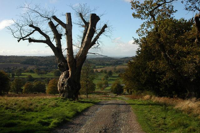 Old oak tree, Eastnor Park - geograph.org.uk - 1025694