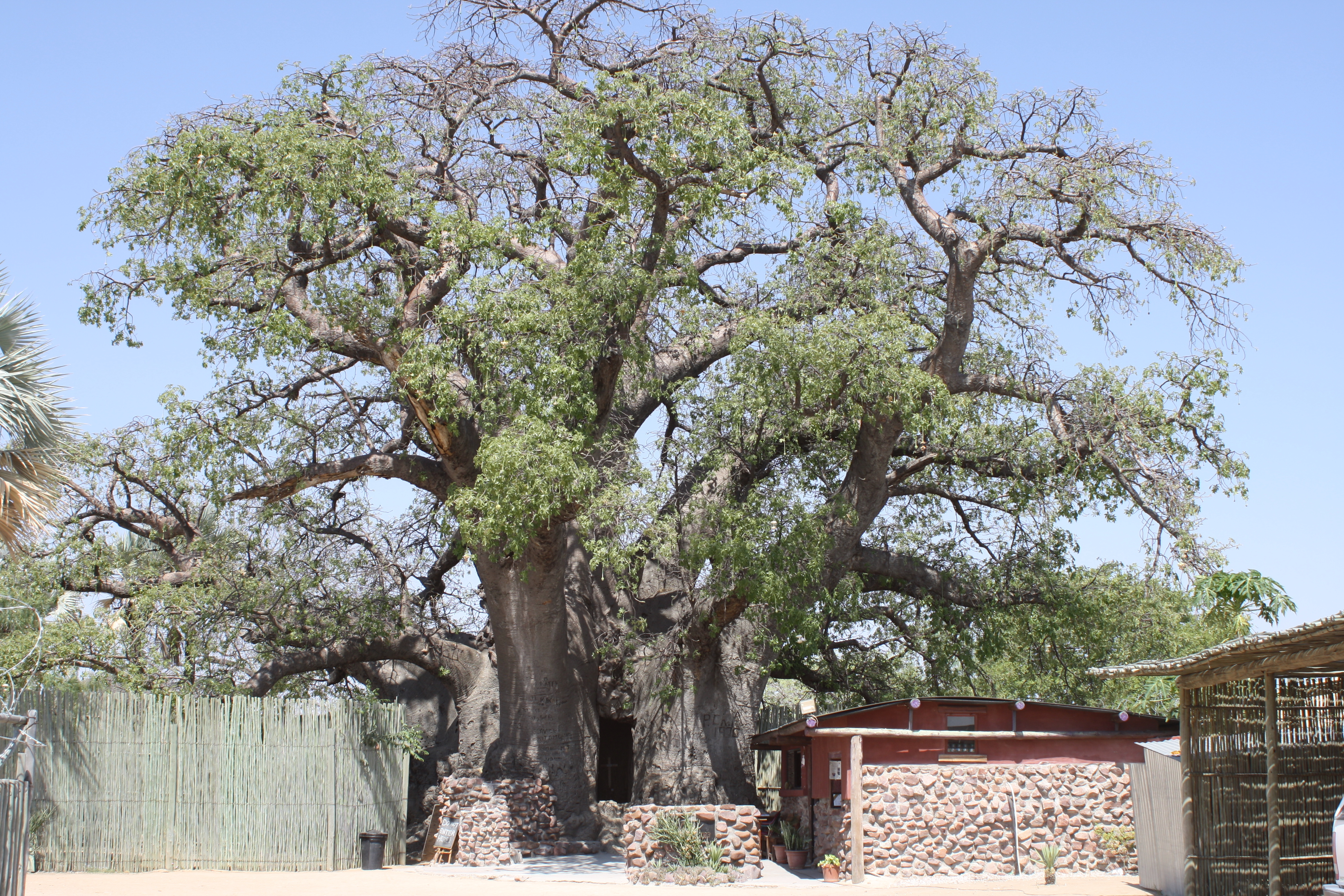 Self-drive, Namibia, Adventure, Caprivi, Zambezi, Etosha, namibia self-drive, open africa, millennium challenge account