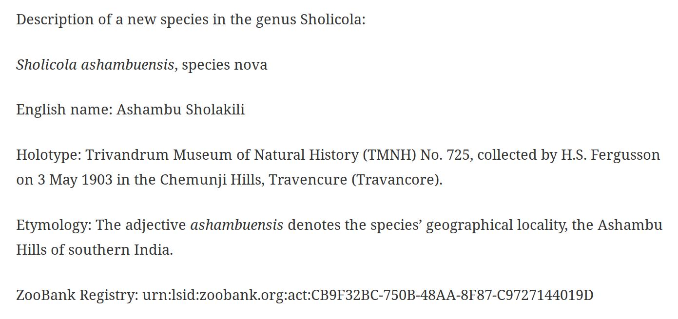 Part of taxon treatment of Sholicola ashambuensis (screenshot).png