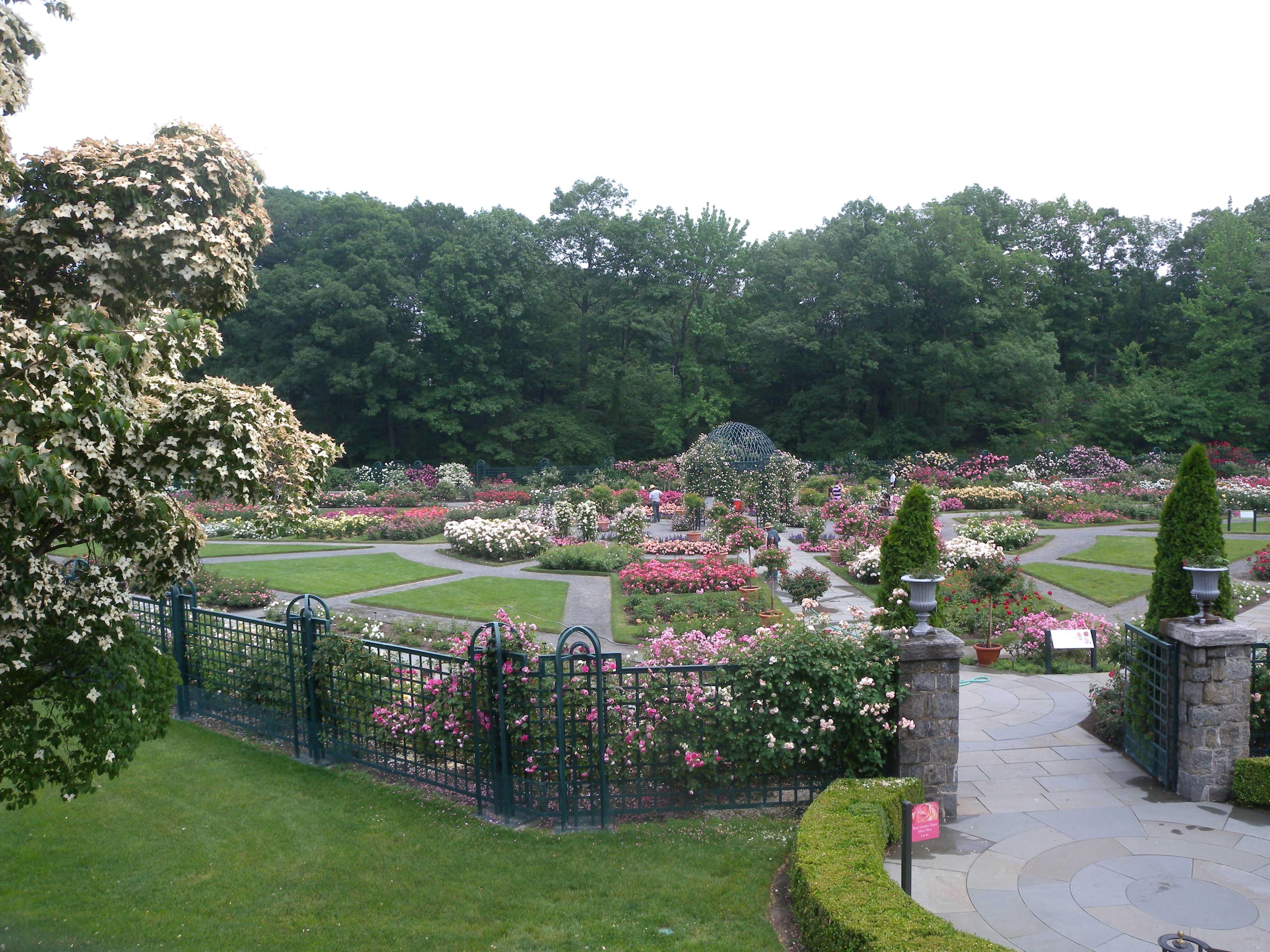 Description peggy rockefeller rose garden nybg jeh