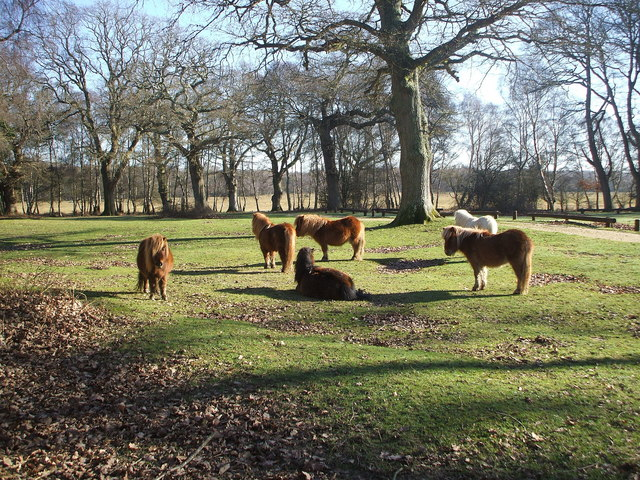 Shetland Ponies in the Camp Site Grounds - geograph.org.uk - 684086