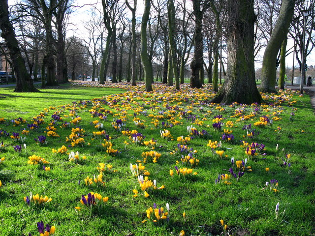 Spring in the Meadows, Edinburgh - geograph.org.uk - 350540