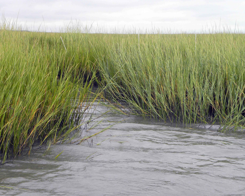 50% of Salt Marshes at Risk of Destruction, Gullah/Geechee Nation Fights Back