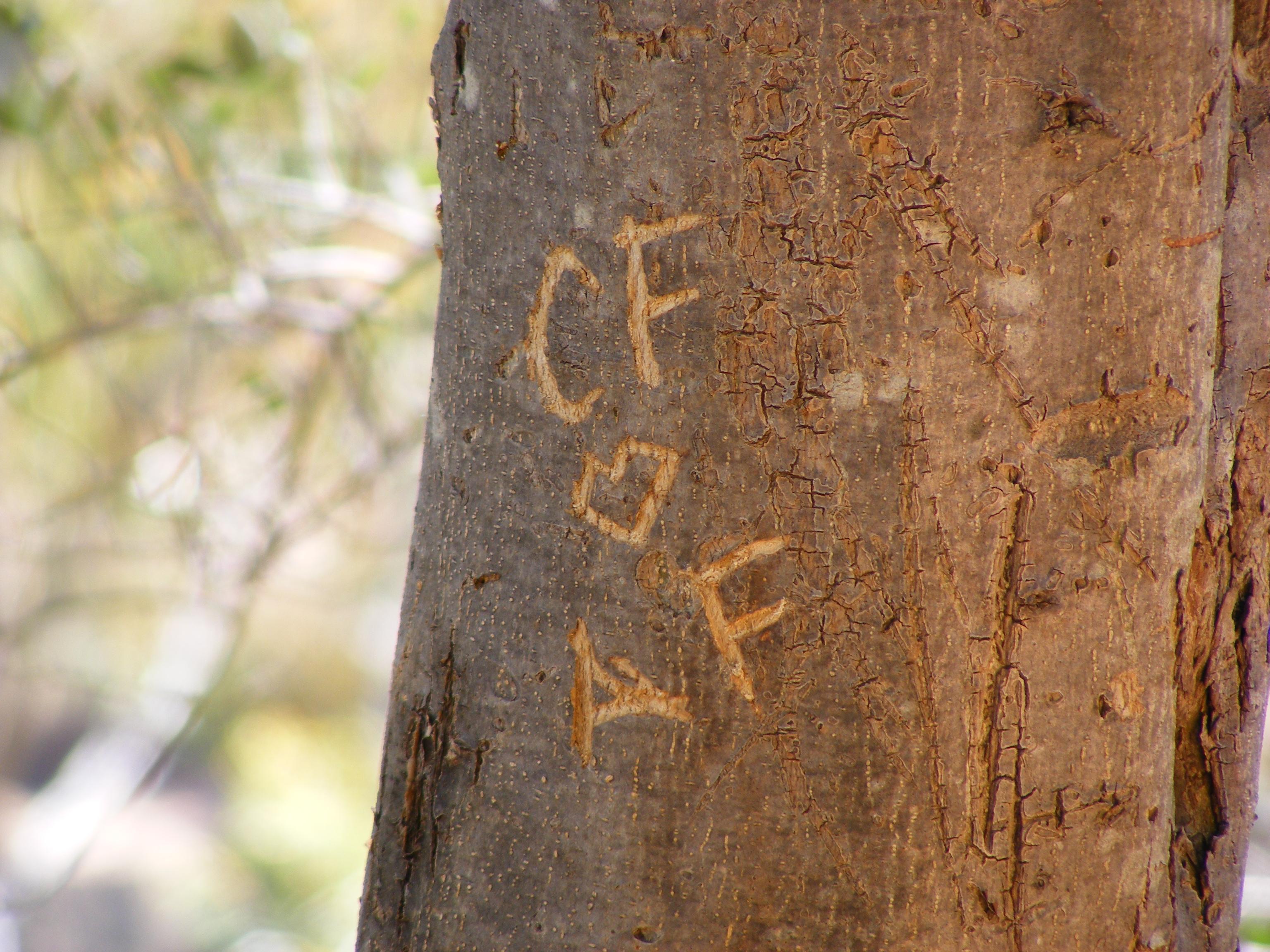 File tree carving vandalism adelaide g wikipedia