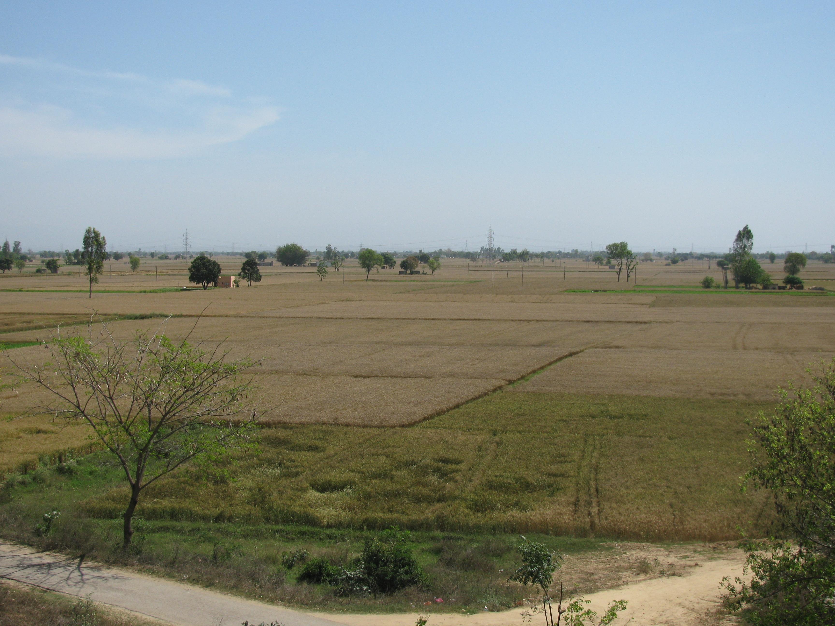 File:Typical Punjabi Landscape.JPG - Wikimedia Commons