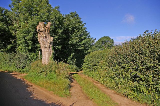 File:Bridleway to Beaminster - geograph.org.uk - 1022636.jpg