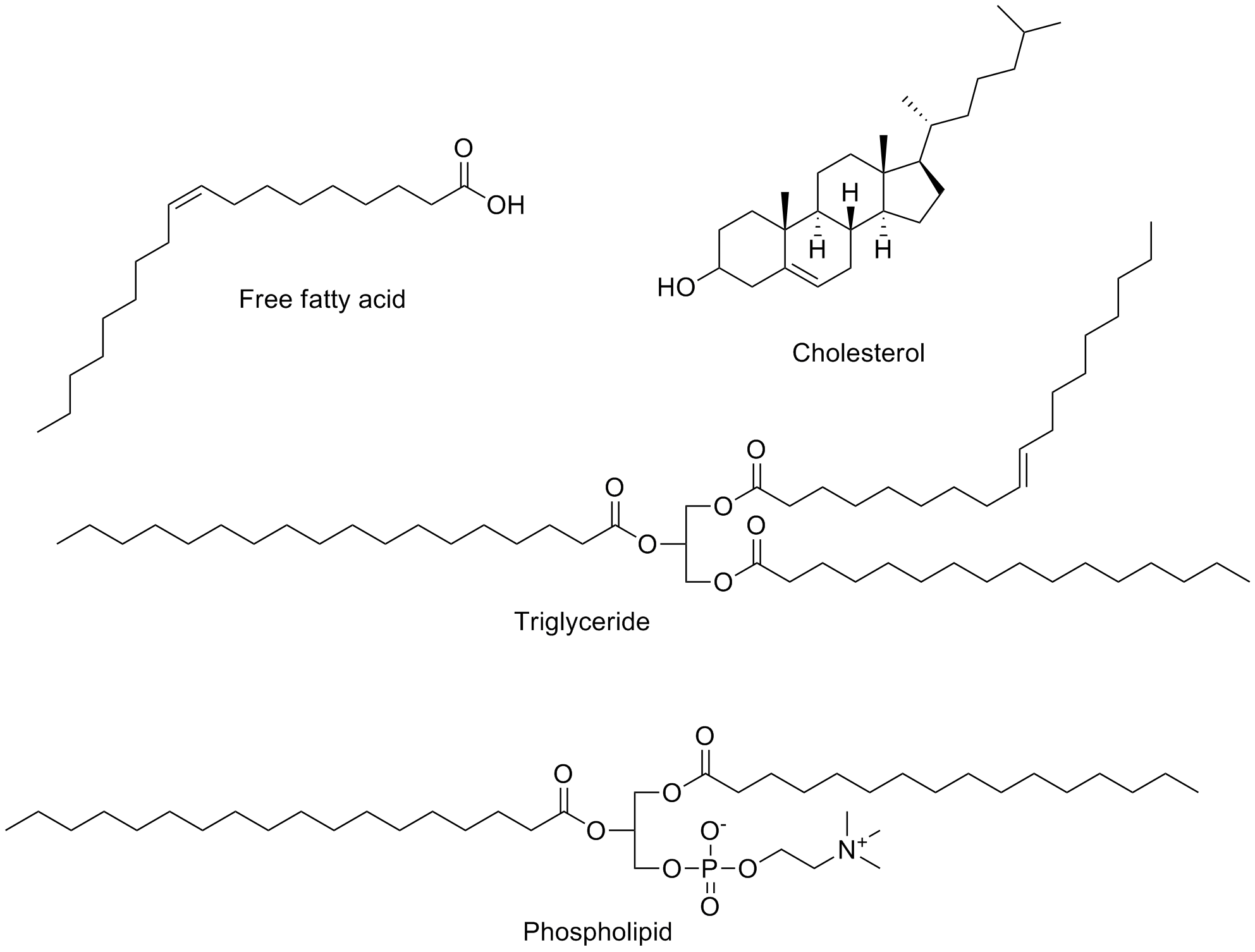 Chemical Structure Properties Of Lipids