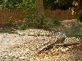 Crocodile Zoo.jpg