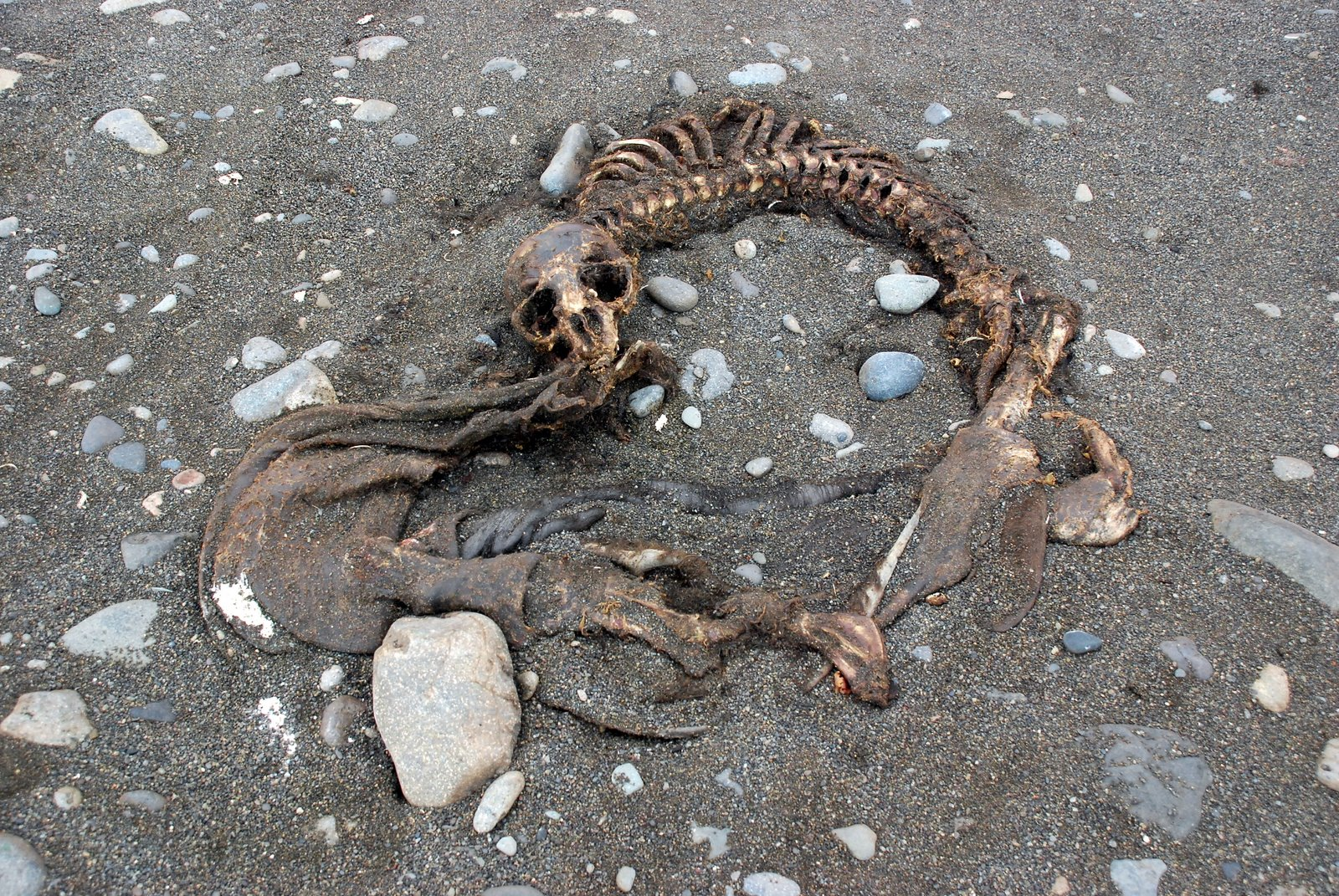 Is Decomposition A Physical Or Chemical Property