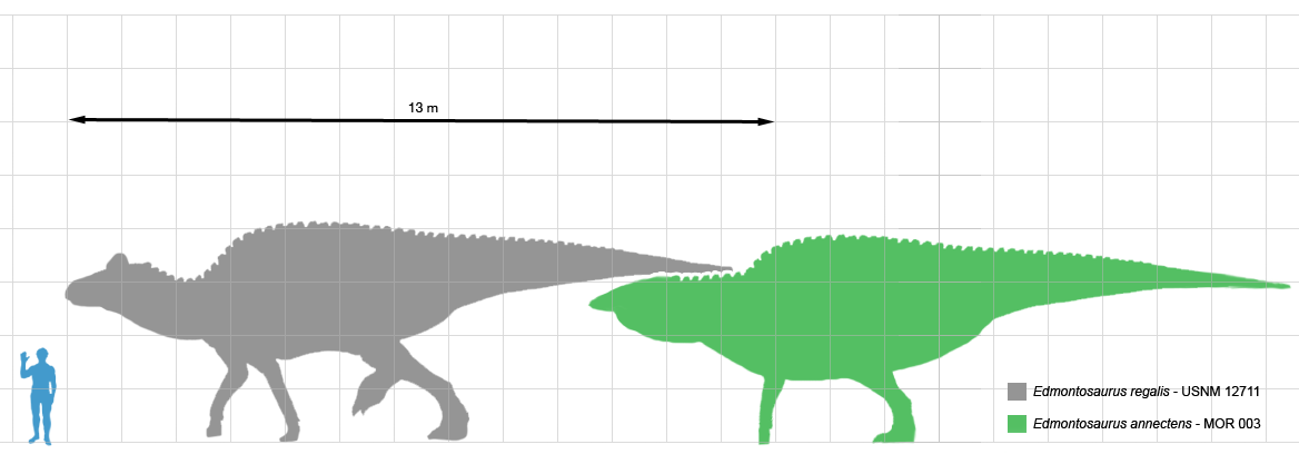 File:Edmontosaurus scale.png - Wikimedia Commons