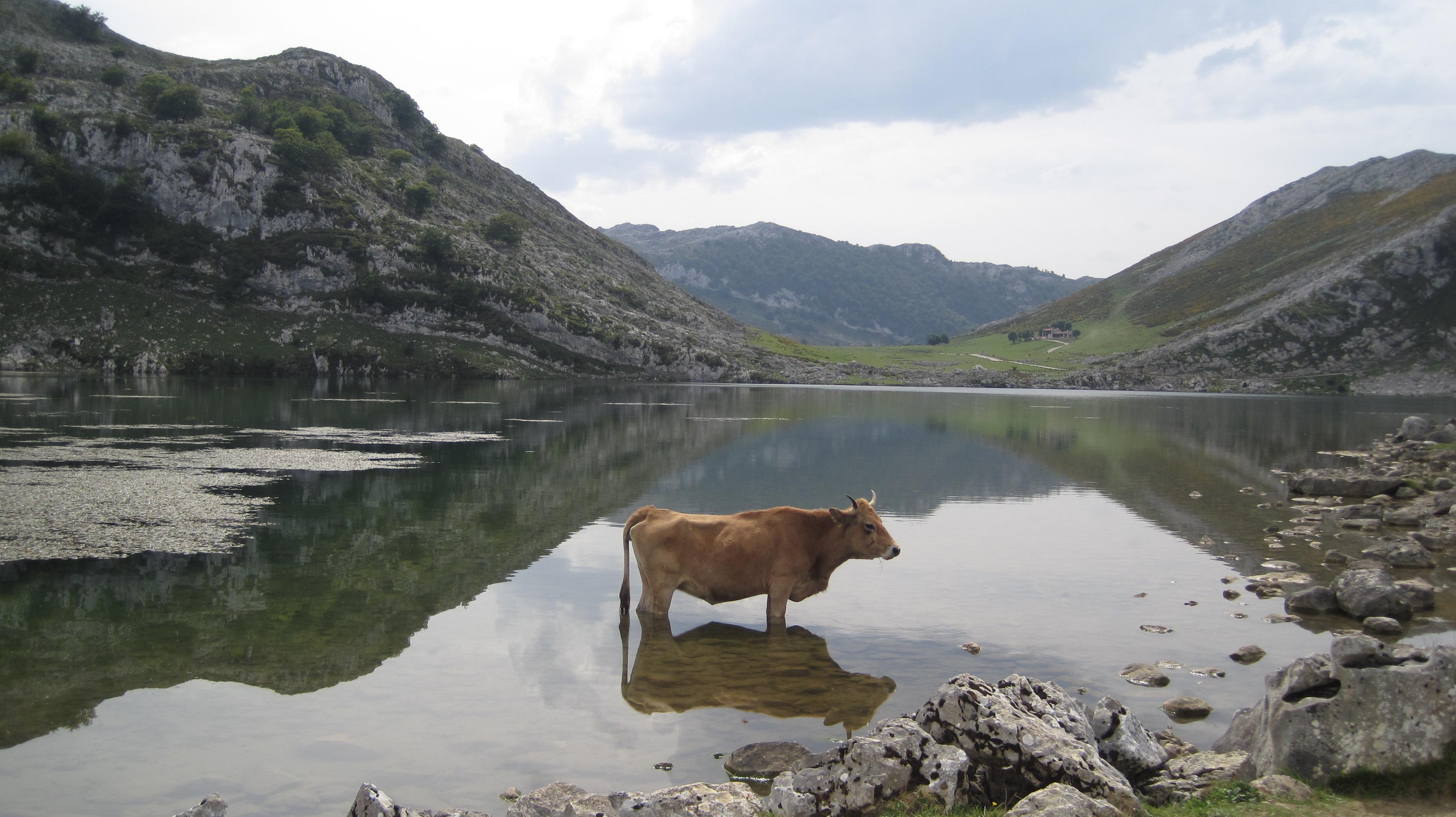 Lago Enol (Asturias, España), pequeño lago de montaña localizado en los Picos de Europa. Próximo al lago de la Ercina, con el que forma el conjunto conocido como Lagos de Covadonga.