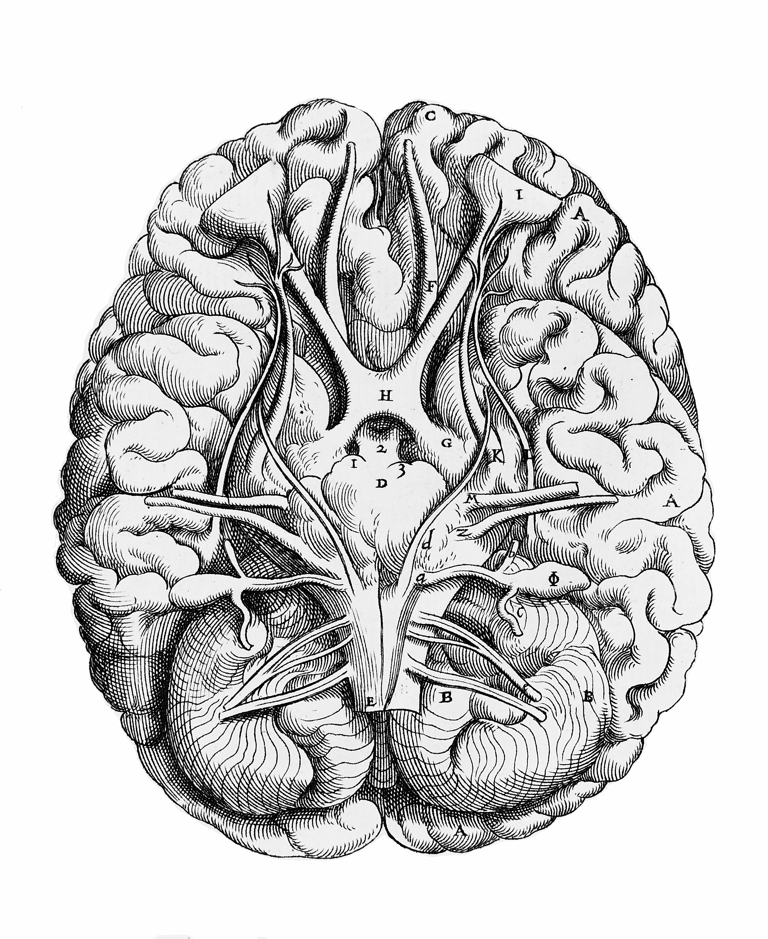 the description of huffing and what it does to the brain The cluster of intolerable symptoms that you describe may be linked to long-term neurological effects of huffing, as you seem to suspect it is known that glue contains neurotoxic chemicals like toluene this and other neurotoxins are known to damage or kill brain cells that do not regenerate toluene has.
