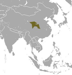 Gansu mole species of mammal
