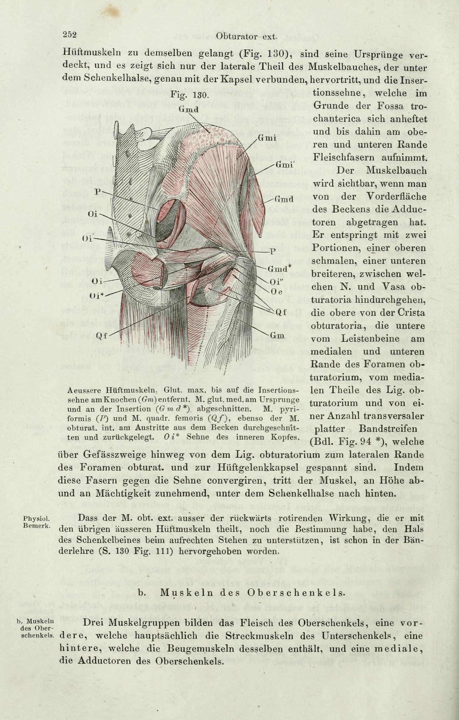 File:Handbuch der systematischen Anatomie des Menschen (Page 252 ...