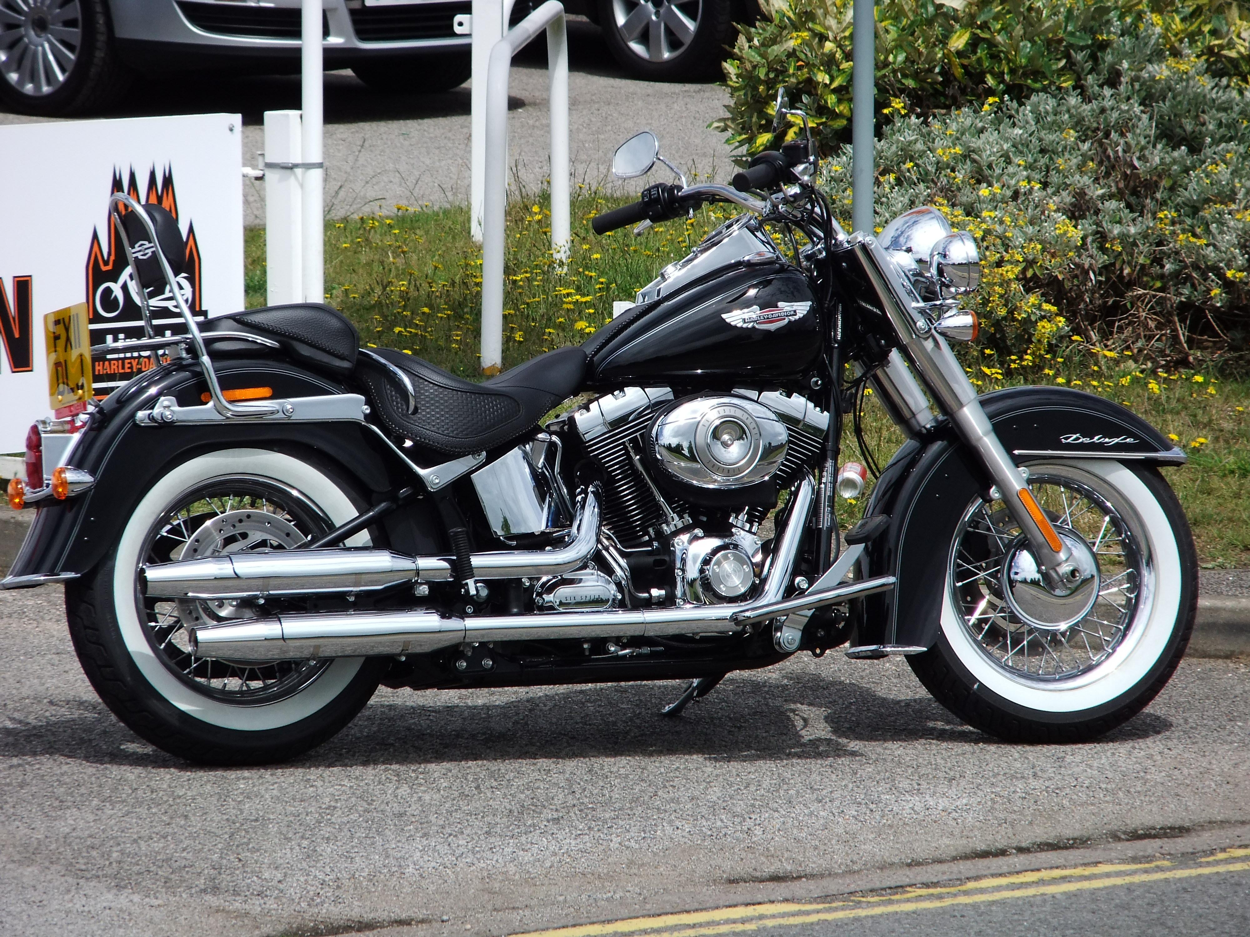 Harley Davidson Black Bear