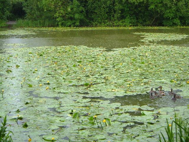 Hunstrete Lake
