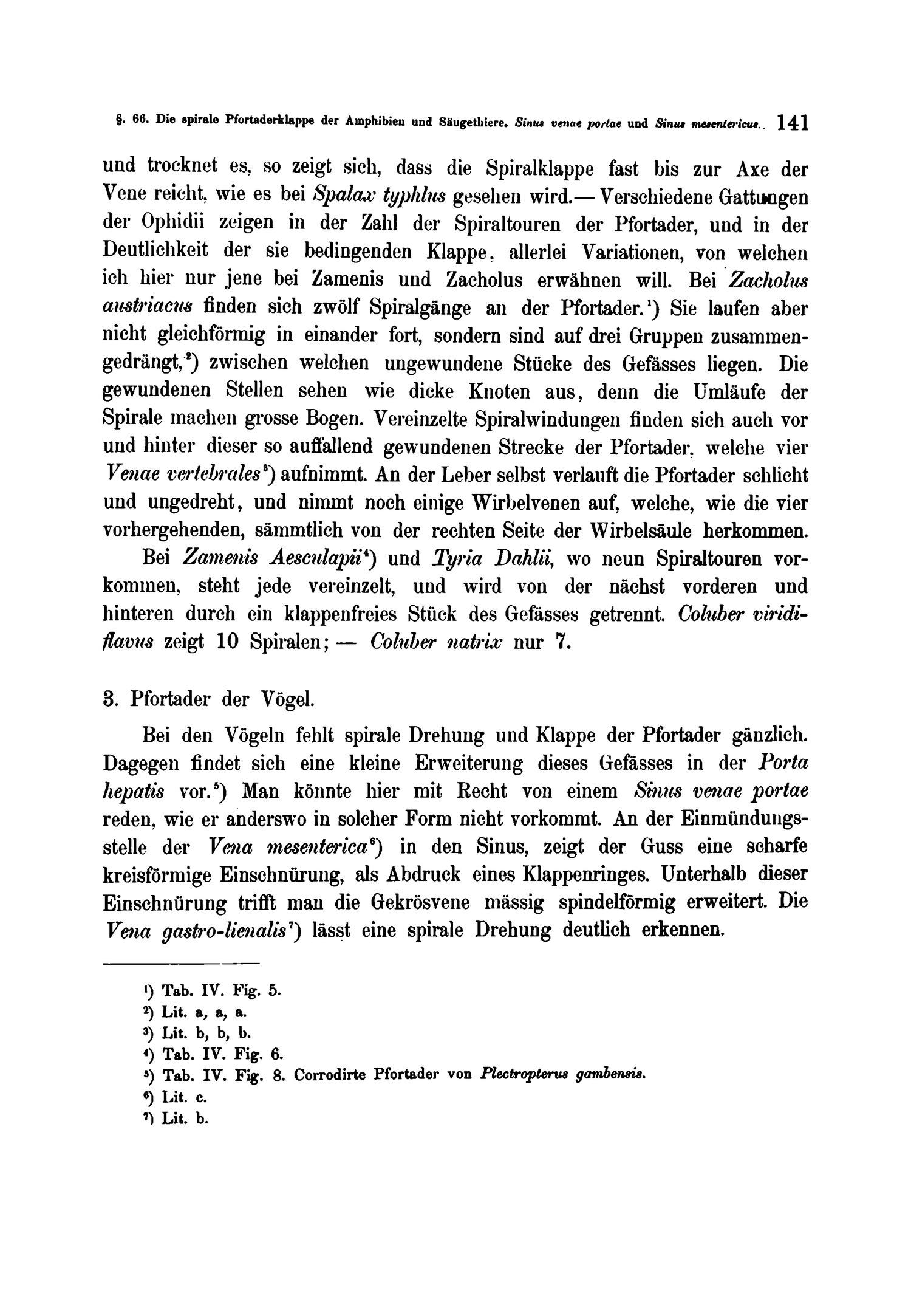 Erfreut Pfortader System Anatomie Bilder - Anatomie Von Menschlichen ...