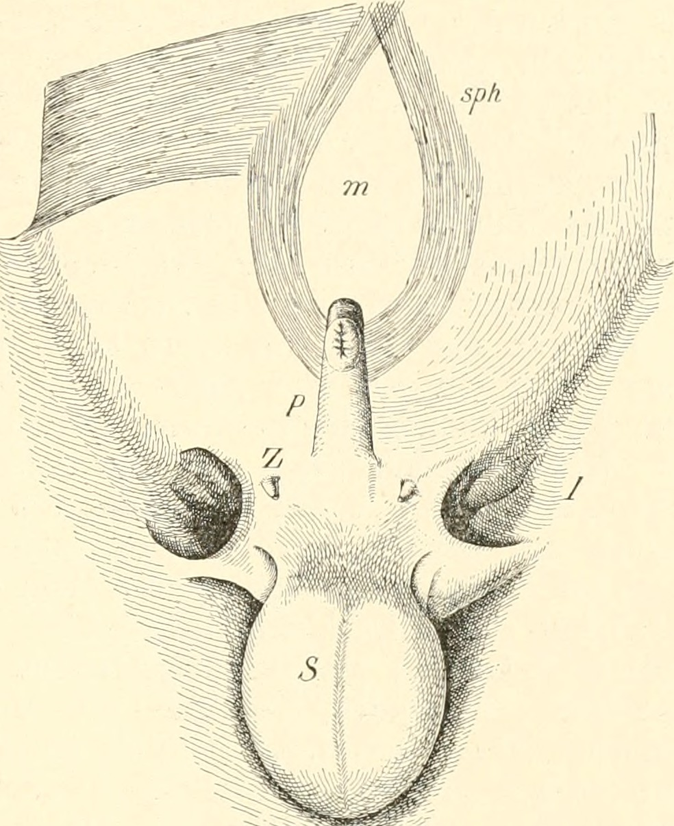 File:Image from page 52 of \