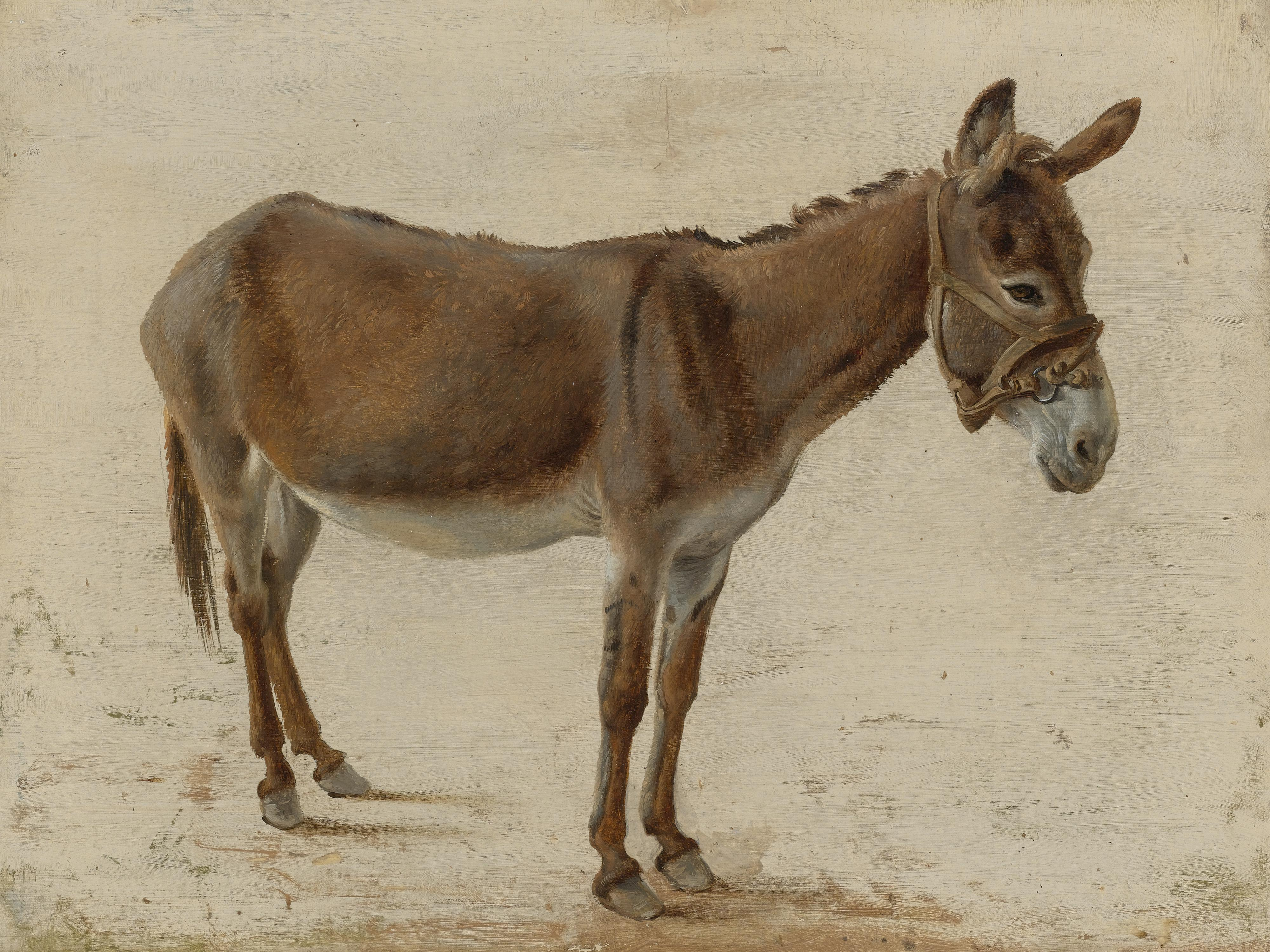 File:Jacques-Laurent Agasse - A donkey.jpg - Wikimedia Commons