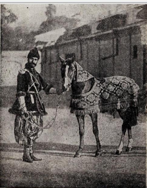 Karabakh stallion.jpg