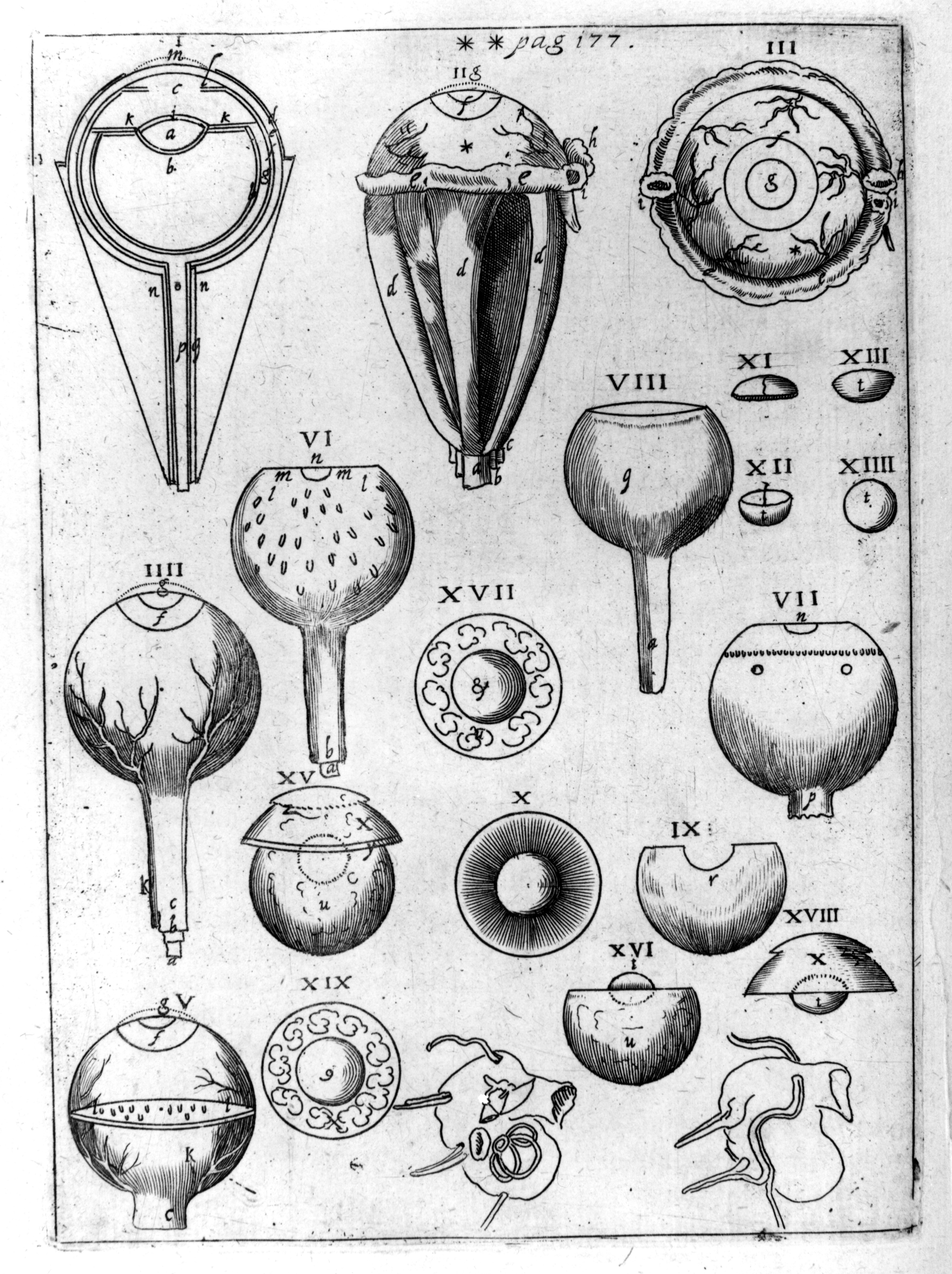 johannes kepler summary The astronomers tycho brahe and johannes kepler tycho brahe (1546-1601,  shown at left) was a nobleman from denmark who made astronomy his.