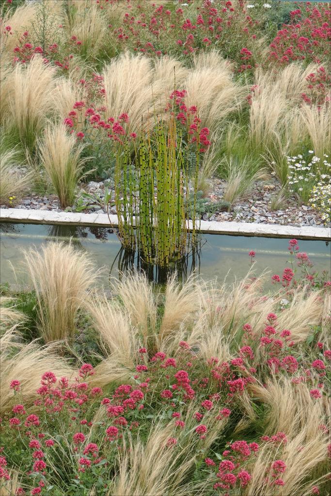 File le jardin des orpins et des gramin es estuaire st - Jardin de graminees photos ...