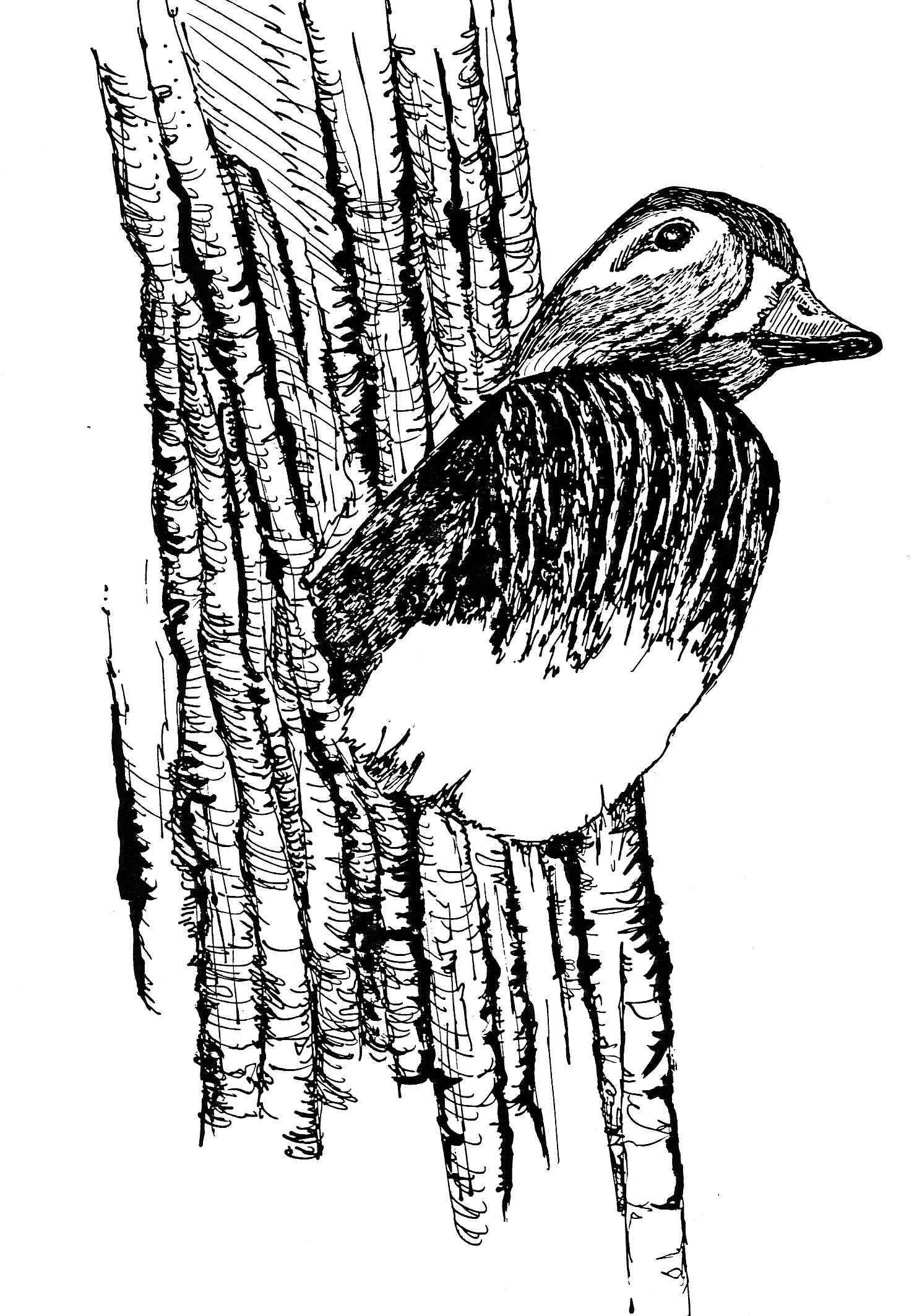 Line Art Duck : File line drawing art duck in nest g wikimedia commons