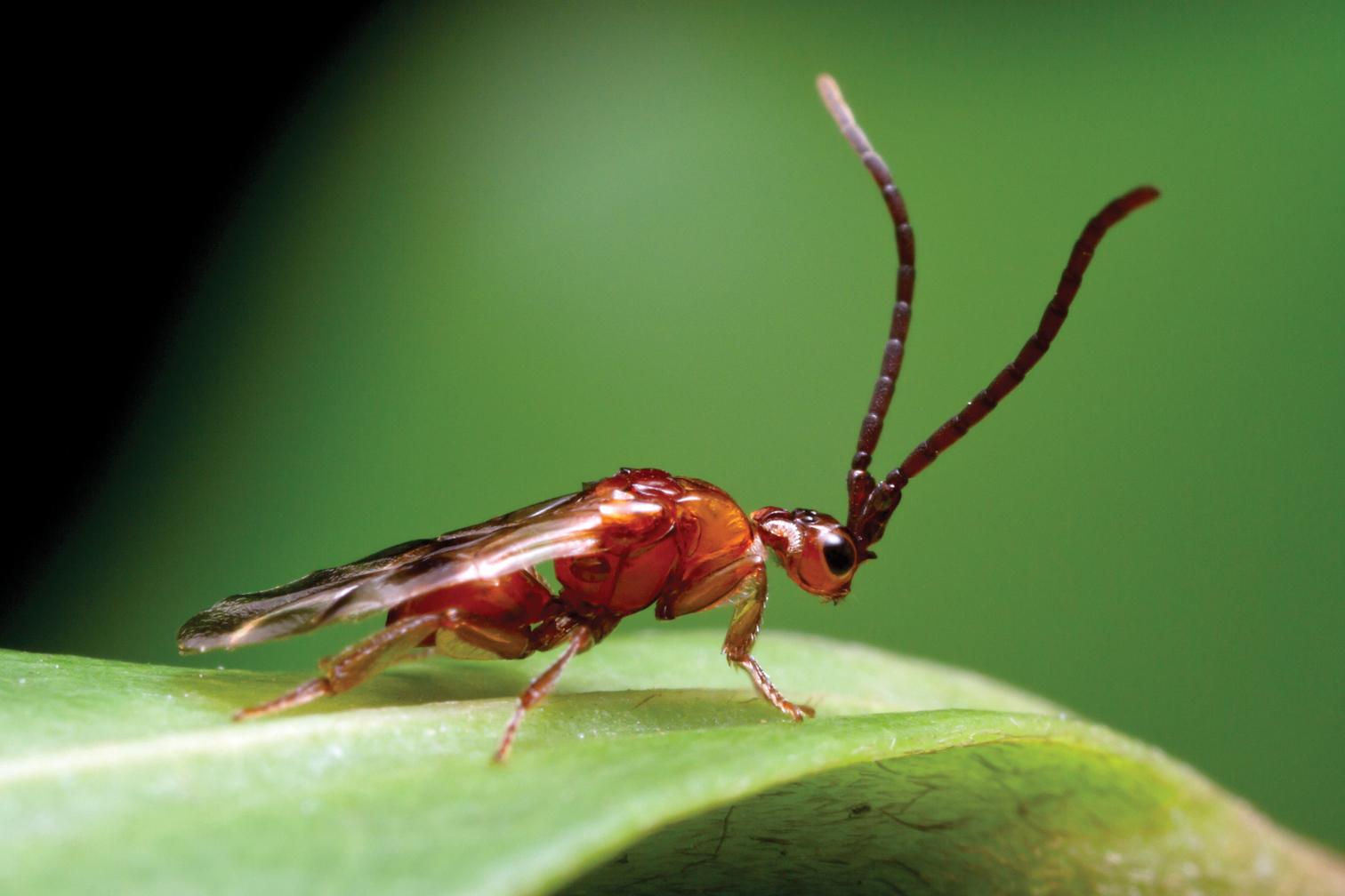 diabolical-wasp