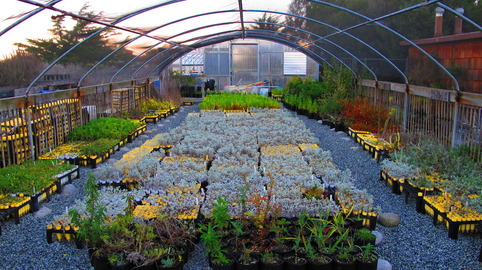 File Native Plant Nursery At The Asilomar Conference Grounds Jpg